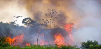 Amazonía arde de nuevo y Bolsonaro dice que es mentira