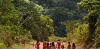 indigenas agricultura congreso de brasil
