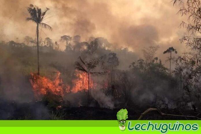 Decretan estado de emergencia en Brasil por incendios en Amazonía